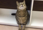 Missing Cat Found 4 Years Later In Canada