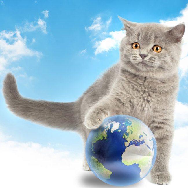 Most Cat-Loving Country