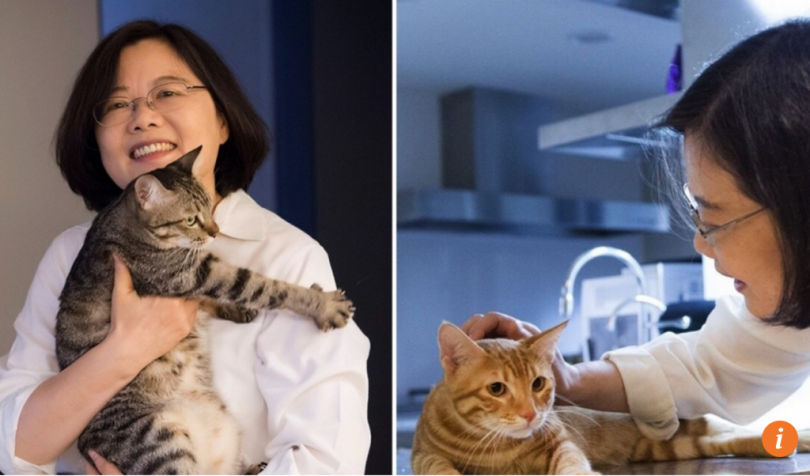 Taiwan Bans Slaughter Of Cats And Dogs