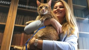 Three-Legged Cat Relieves Stress At Cambridge