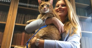 Three-Legged Cat Relieves Stress At Cambridge