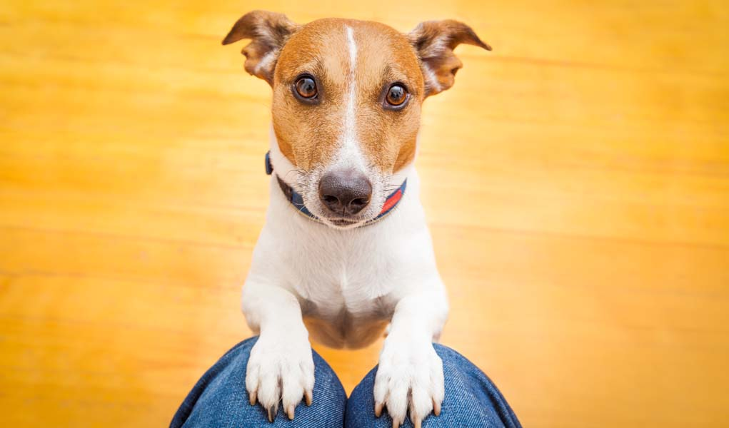 Bad Dog Behaviors Encouraged By Owners