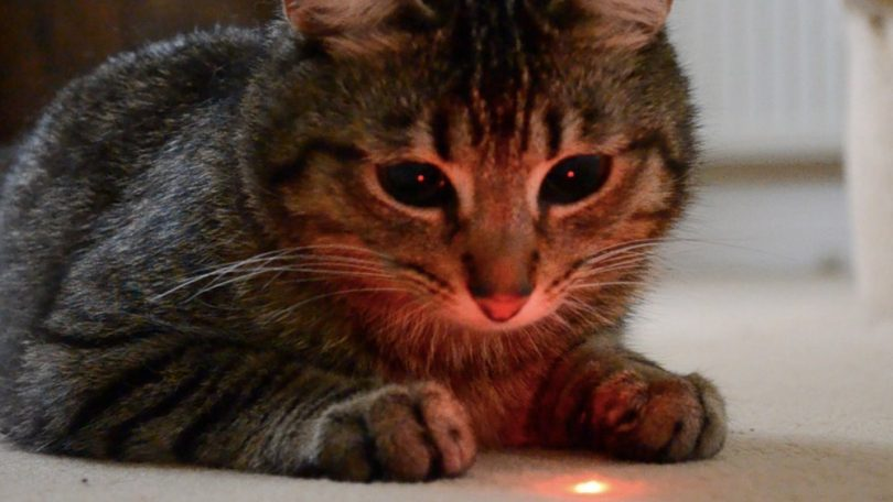 How Good Are Laser Pointers For Cats