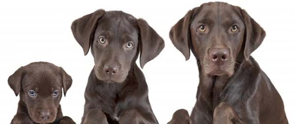 How To Determine A Dog's Age