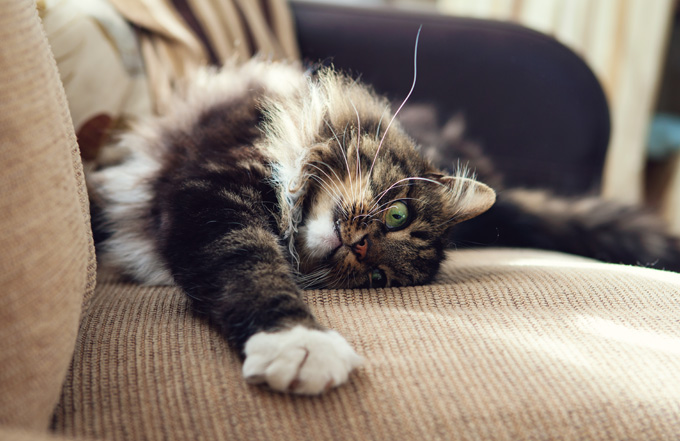 Most Frequent Problems With Cat Behavior