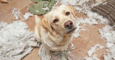 New Dog Owner Common Mistakes