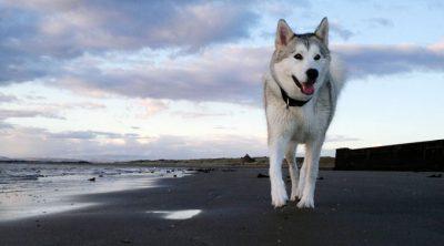 Top 10 Best Looking Dogs