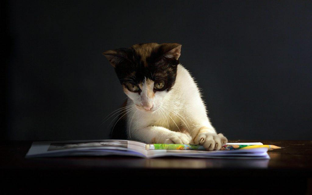 Top 10 Cat Magazines