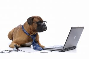 Top 10 Dog Blogs
