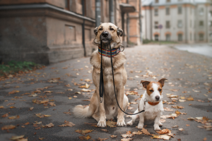 Top 10 Dog Movies