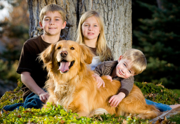Top 10 Dogs With Kids