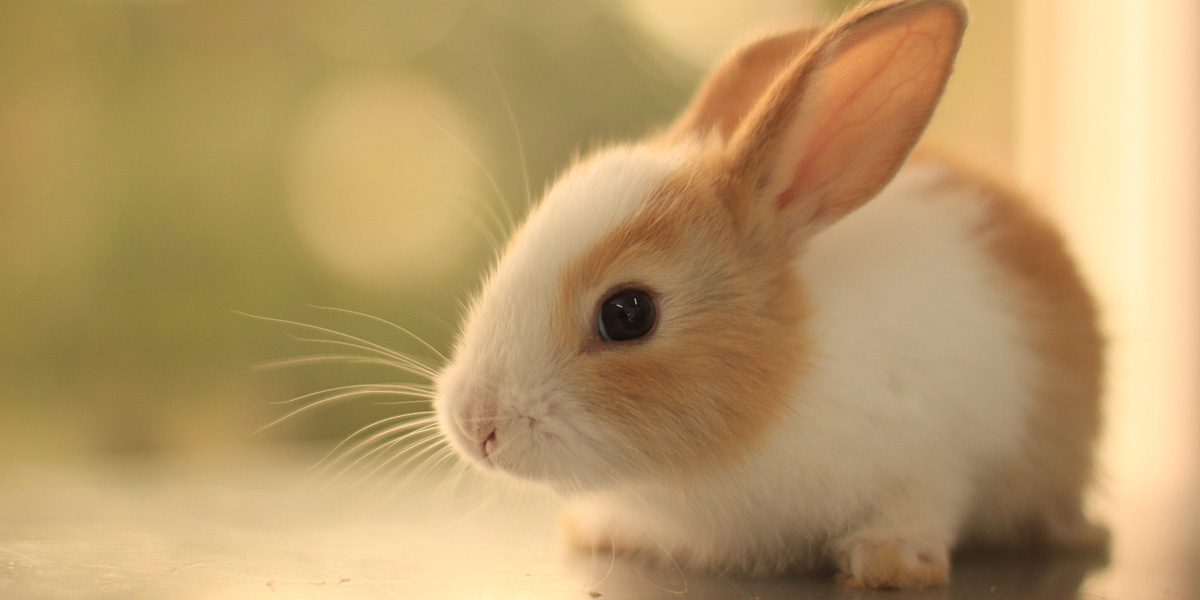 Top 10 Names For Rabbits