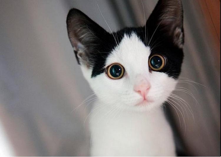 Top 20 Cutest Cats