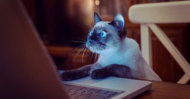 Top 30 Cat Blogs 2017