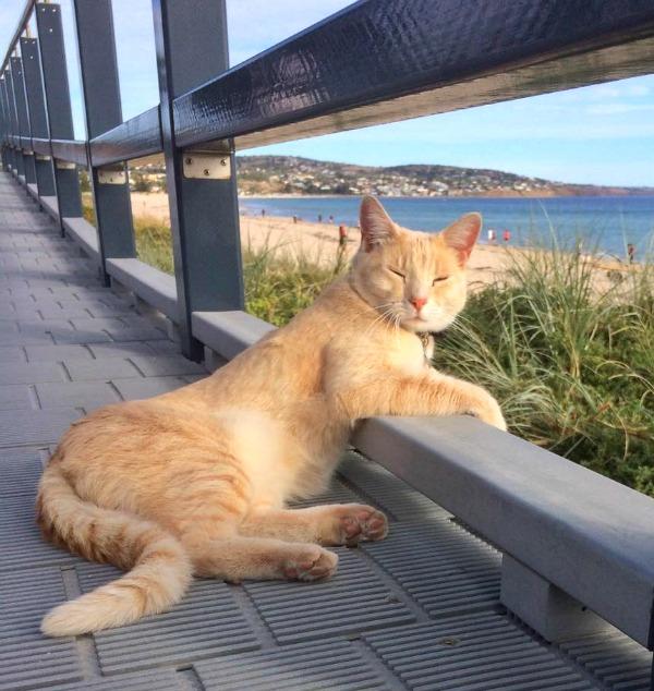 Top 30 Cat Blogs 2017