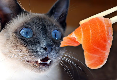 Can Cats Eat Salmon