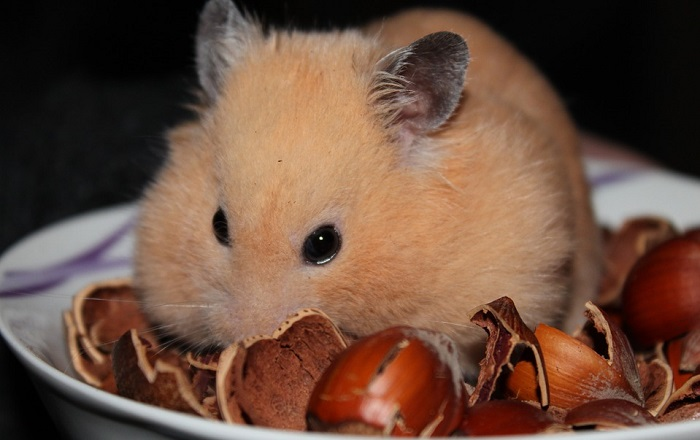 Safe Foods For Hamsters To Eat