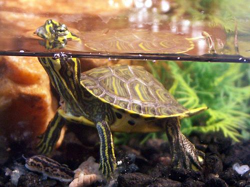 How To Setup A Turtle Tank