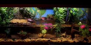 How To Setup A Turtle Tank