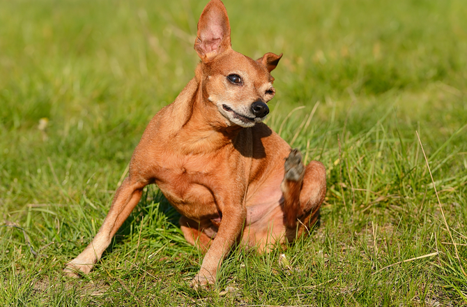 How to Identify and Treat Ant Bites and Stings in Dogs