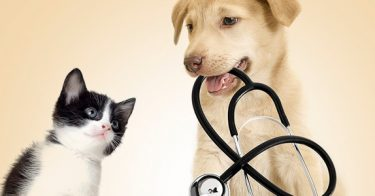 How to Protect Your Pet: Common Causes of Sudden Death