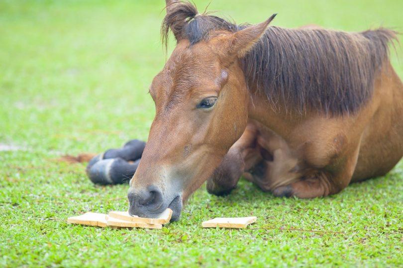 Can Horses Eat Bread