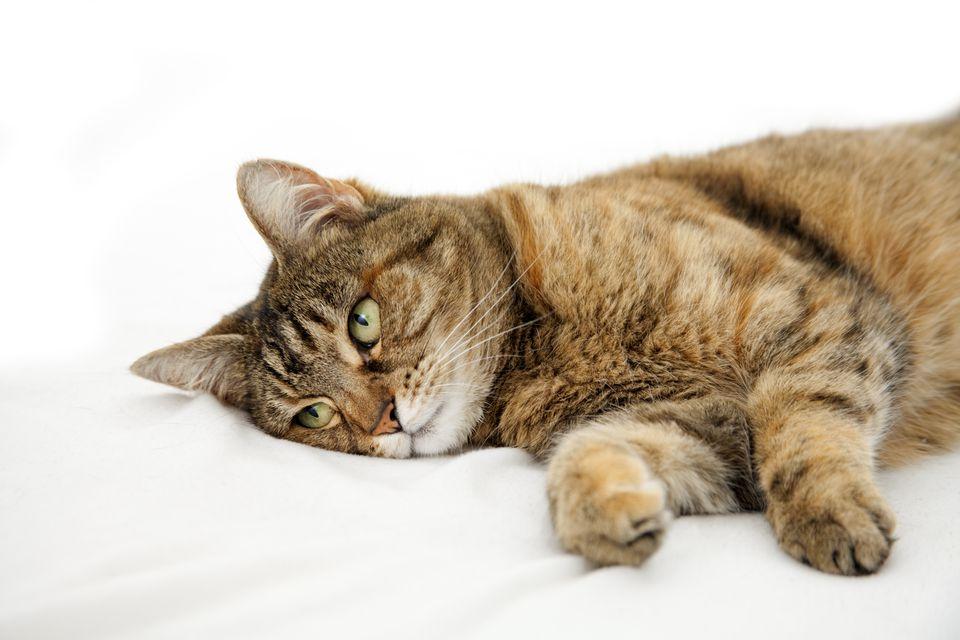 Cat Epilepsy Treatment