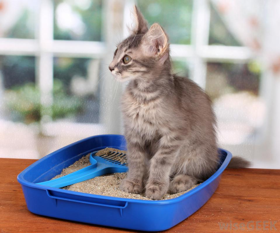 Cat Treatment For Tapeworms Furry Tips