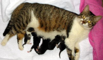 Cat Birth Tips