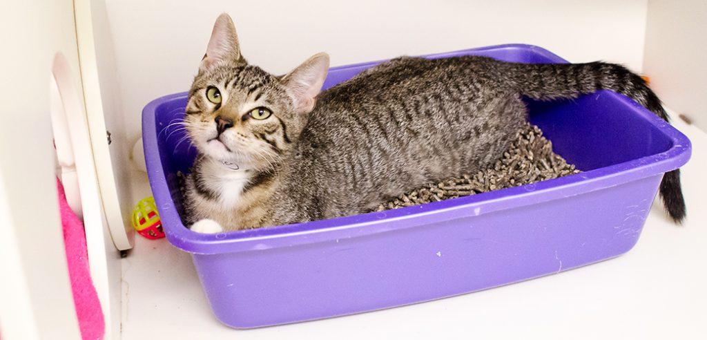 Cat Litter Box Health Risks