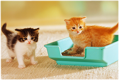 Cat Litter Box Health Risks