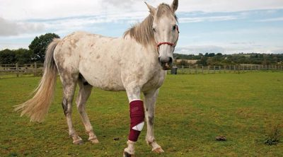 Common Horse Health Problems