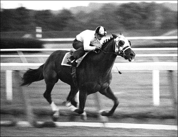 Top Ten Fastest Horses