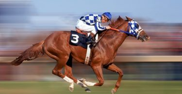 Top Ten Fastest Horses