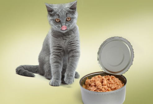 How Much Tuna Can a Cat Eat