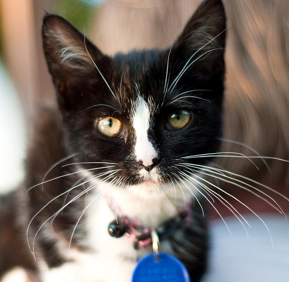 How to Open Breakaway Cat Collar