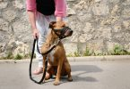 How to Use a Dog Muzzle