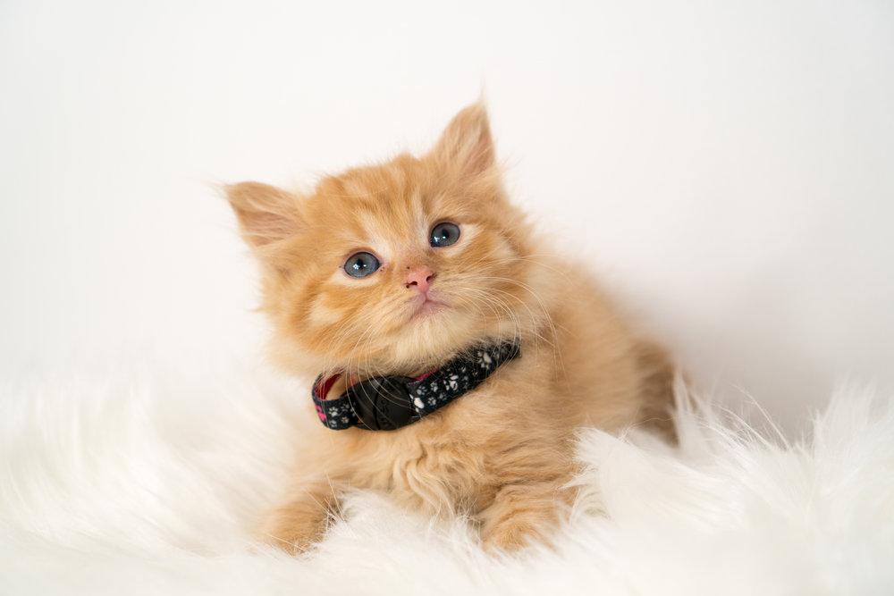 Should I Use a Cat Collar