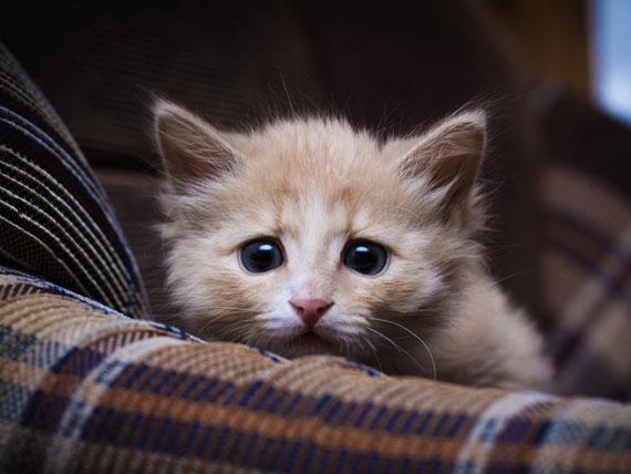 Top 10 Cat Breeds 2017