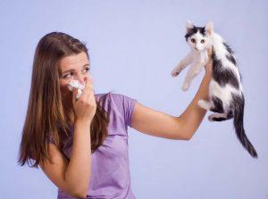 Cat Bad Breath Home Remedy