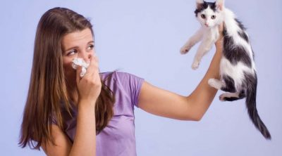 Cat Bad Breath Home Remedy