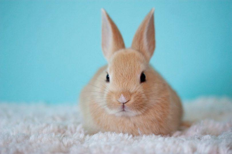 where can rabbits sleep