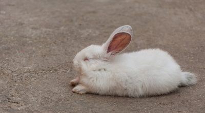 how do rabbits sleep