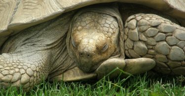 how do turtles sleep