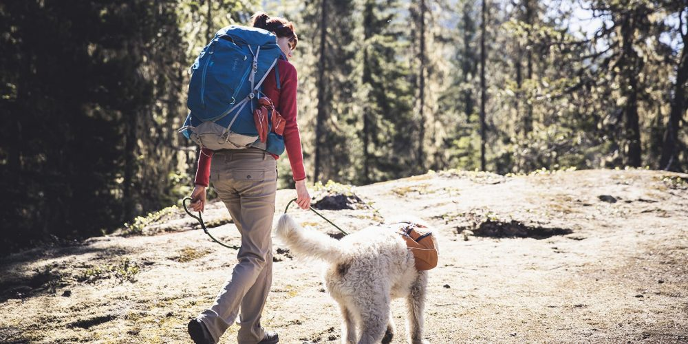 Tips For Getting Most Out Of Hiking With Your Dog