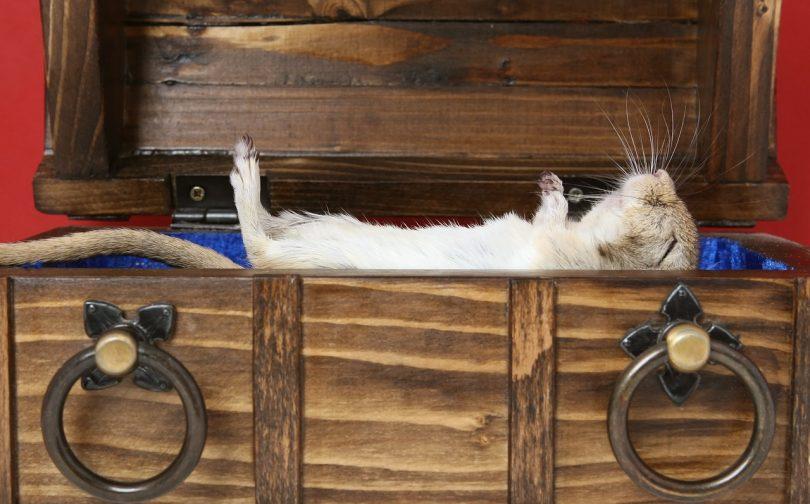 how do hamsters sleep