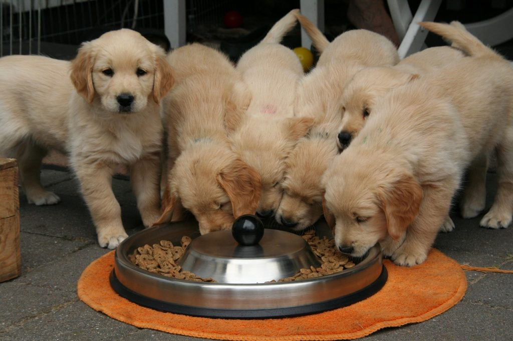 Best puppy food with feeding guidelines