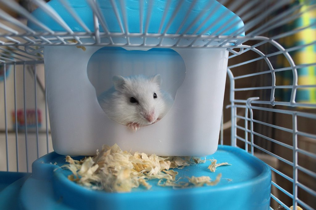 Hamster Cages: A Short Guide