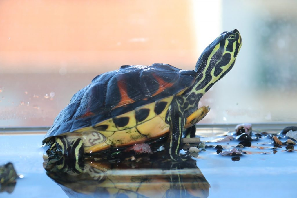 Some Tips To Keep Your Turtle Happy