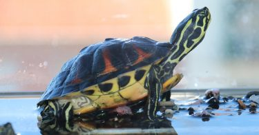 how to keep your turtle happy